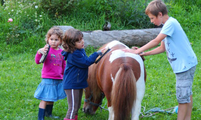 hoferlebnis-fruehling-pony-striegeln