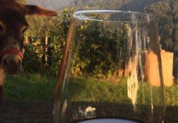 Ein Glas Rotwein mit Zuschauer