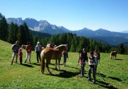 Wanderung über Pferdekoppel
