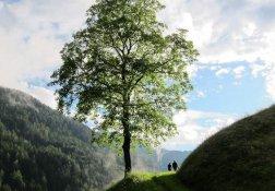 Wandern unter den Bäumen